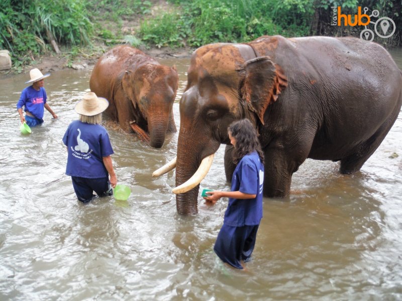 Bath time is one of the favorite times of the day for the elephants at Baan Chang