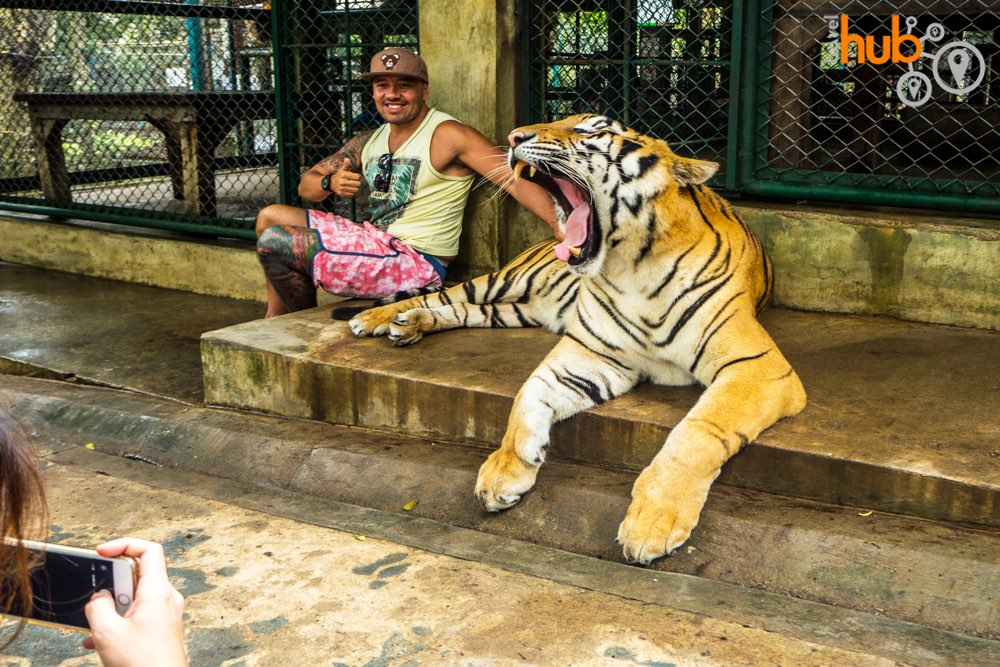 Tiger Kingdom - in the cage with a fully grown tiger!