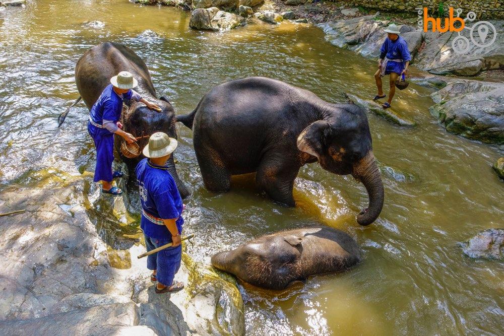Elephant bath time at Mae Sa Elephant Camp