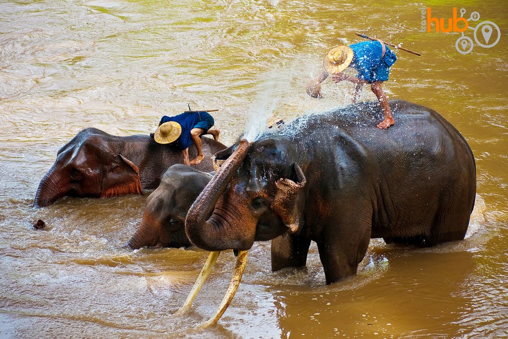 watch the elephants enjoy their bath in the river