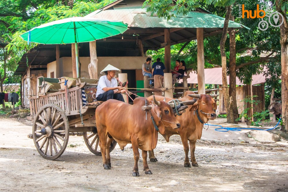 Try ox cart ride at the elephant park