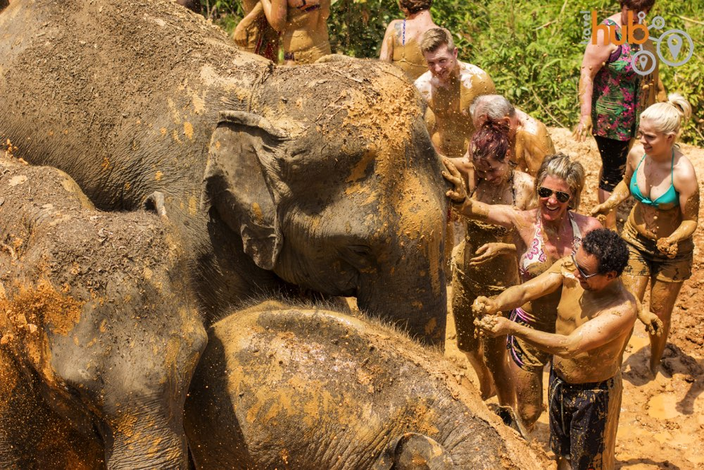 Feel free to get involved with the elephant's bath time