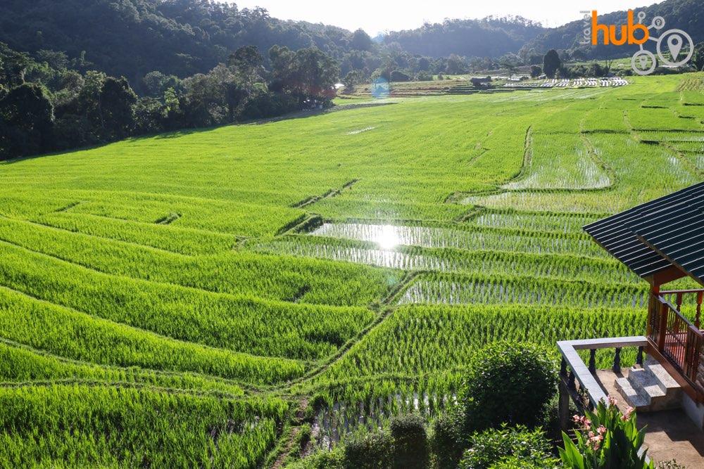 The terraced rice paddies near Mae Klang Luang village
