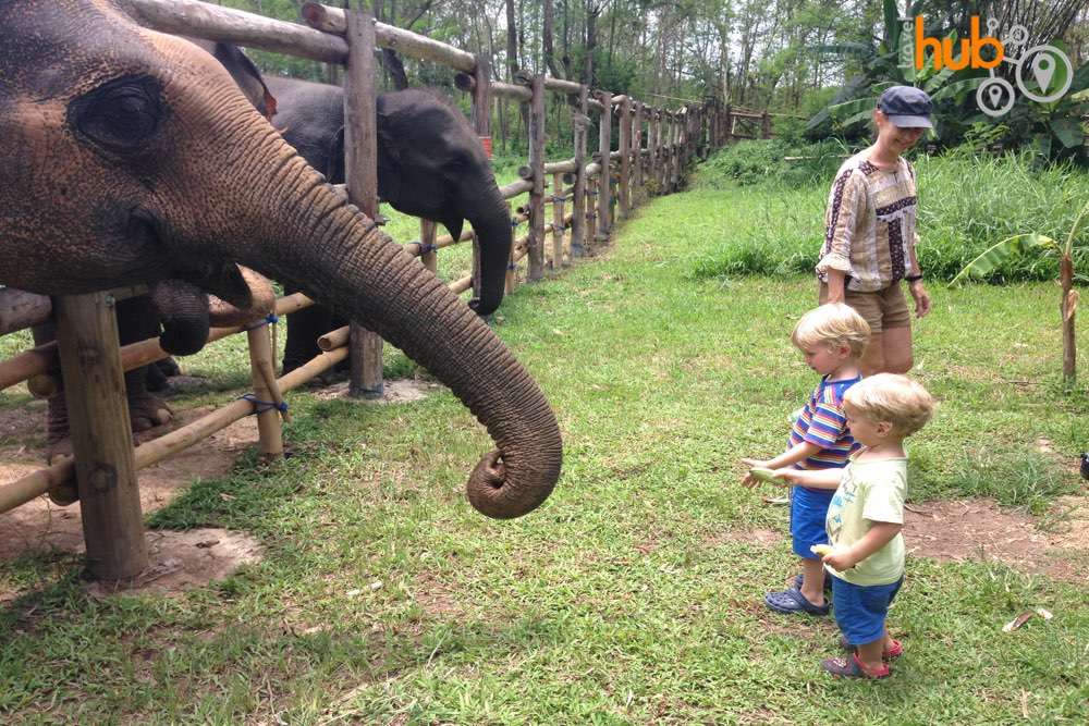 We will stop by at one of the most ethical elephant sanctuaries in the whole of Thailand