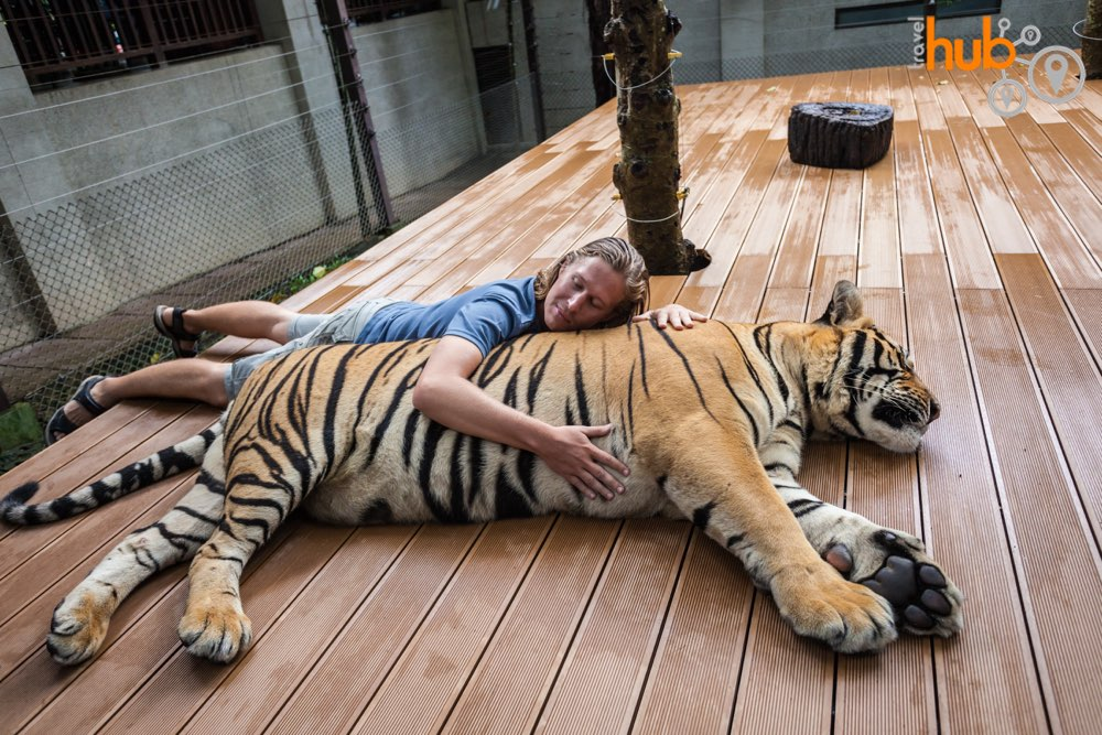 if you wanna hug a tiger then you can do it on this package tour!
