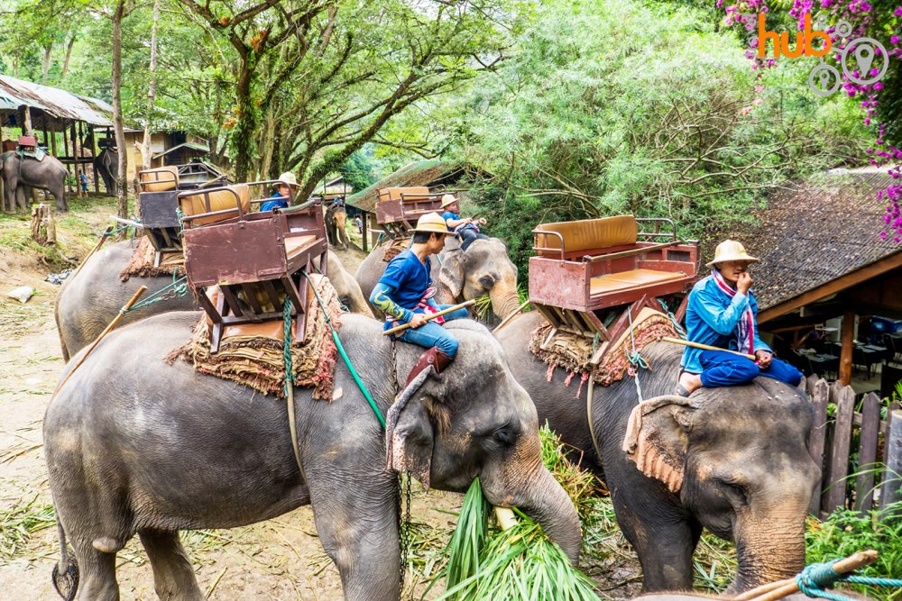 Elephants will demonstrate some of their skills at the elephant camp and you can take the option of an elephant ride