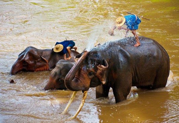 Elephant Safari tour Chiang Mai
