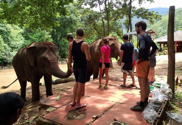 One day trek with Elephant care
